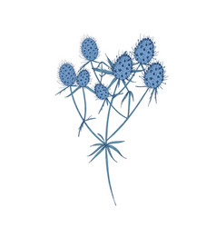 Field eryngo flowers stems and leaves isolated on vector