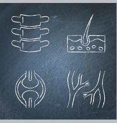 Human organs icon sketch set on chalkboard vector