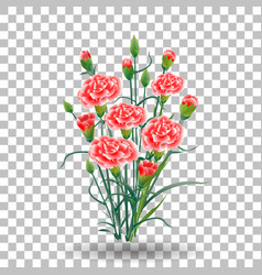 Red carnation schabaud flower green stem leaves vector