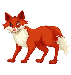 Fox with red fur standing vector