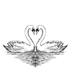 Two swans sketch hand drawn vector