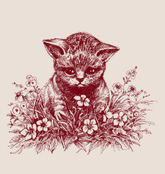 cat sitting between flowers hand drawing vector image vector image