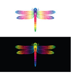 colorful dragonfly design on white background and vector image vector image