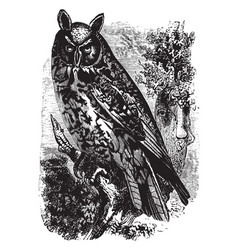 great short eared owl vintage vector image