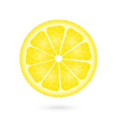 Lemon icon on a white vector