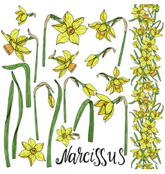 Set hand drawing narcissus flowers vector