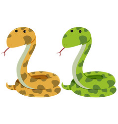 two rattlesnakes on white background vector image