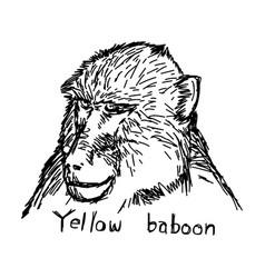 Yellow baboon head - sketch vector