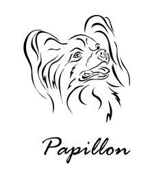 Papillon vector image vector image