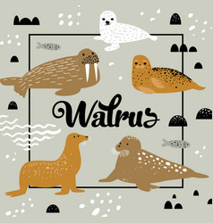 Childish design with seal and walrus vector