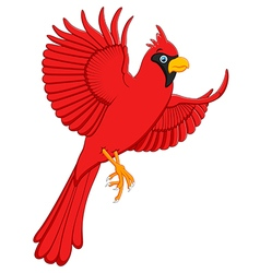 flying cardinal cartoon vector image