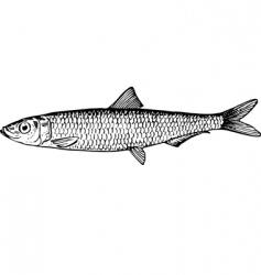 Fish clupeonella vector
