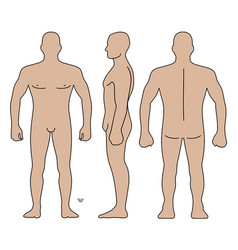 fashion man body full length bald template figure vector image