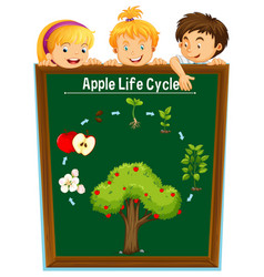 kids looking at apple life cycle vector image