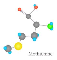 methionine 3d molecule chemical science vector image