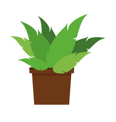 plant in vase vector image