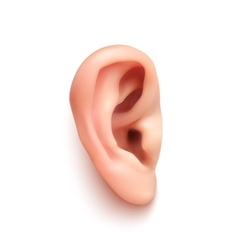 Realistic ear vector