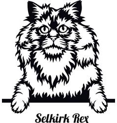 selkirk rex cat - cat breed cat breed head vector image