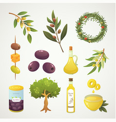 set olives fruit olive oil bottle branch tree vector image