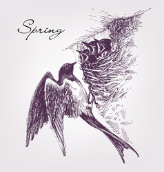 Swallow nest baby birds spring symbol vector