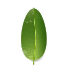 tropical big green leaf vector image