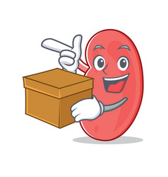 with box kidney character cartoon style vector image