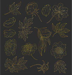 design set with gold line art peony vector image