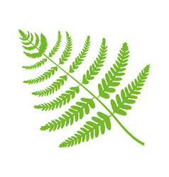 fern plant big green leaf vector image