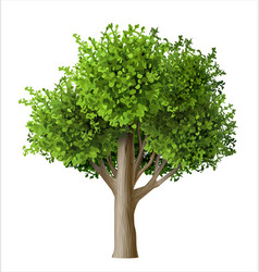 Realistic tree with leaves vector