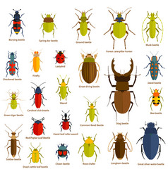 flat insect set isolated on the white vector image vector image