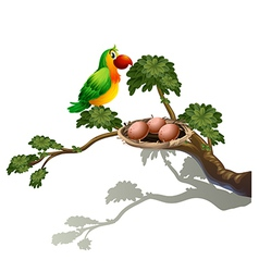 A parrot and a nest vector image
