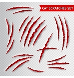 Cat scratches transparent vector image