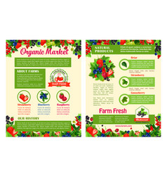 fruit and berry organic market posters vector image
