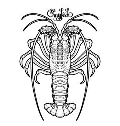 Graphic crayfish vector