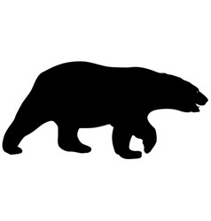 silhouette polar bear on a white background vector image