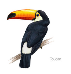 Toucan hand drawn vector