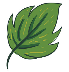 clipart an ovate green leaf with a margin vector image