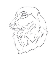 dog portrait lines vector image