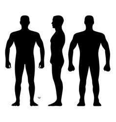 fashion man body full length bald template vector image