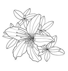 Outline decorative rhododendron flower and leaves vector