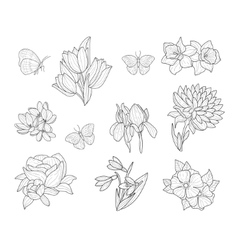 Spring Flowers And Butterflies Isolated Hand Drawn vector image