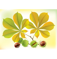Autumn chestnuts and leaves vector image vector image