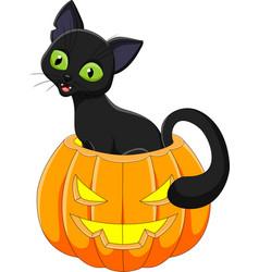 cartoon funny cat with halloween pumpkin vector image