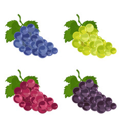 color grapes icons green blue and purple set vector image