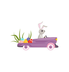 cute bunny driving violet vintage car decorated vector image