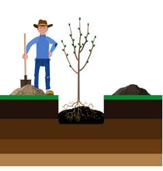 Farmer planting a tree vector