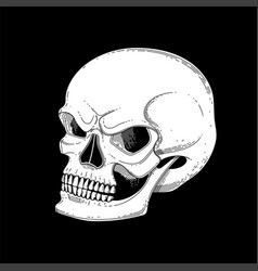 Graphic skull with fearful smile vector