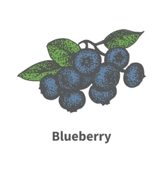 Hand-drawn bunch ripe blue blueberry vector