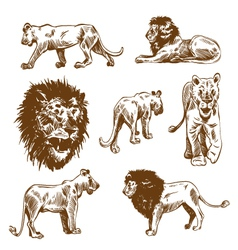 Hand drawn lion set vector image