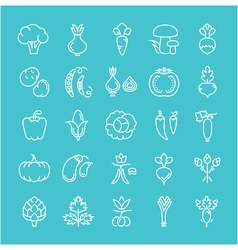 Set Flat Line Icons Vegetables vector image
